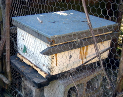 new-hive.jpg