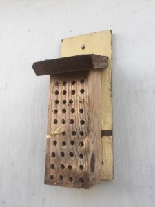 Native bee hotel