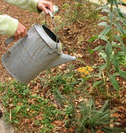 watering-can.jpg