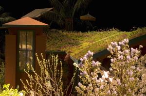 green-roof101.jpg