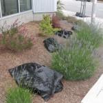 Chai Mulch bags laid out.